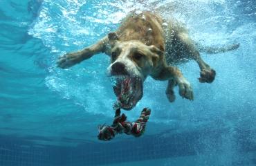 Een topmodel in het zwembad!