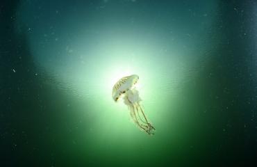 Frank de Bruin- Mooi weer duikje