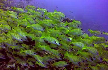 Fedde Meijerink - Duiken in Filitheyo Malediven