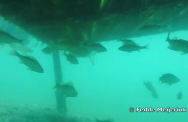 Fedde Meijerink - Scuba diving in Hungary, Gyékényes