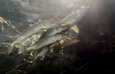 Film: De onzichtbare rivier onder de Rijn
