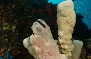 Filipijnen - Vijf bijzondere zeedieren