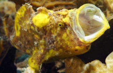 Vijf zeedieren van Bonaire