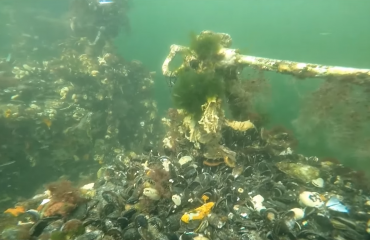 Harry Brummelhuis - Zeeland is ook mooi onderwater