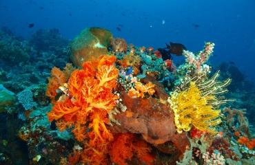Bangka - duiken in het paradijs