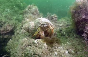 Dirk van den Bergh - De sprookjesachtige onderwaterwereld van Zeeland