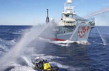 Japan hervat walvisjacht in maart