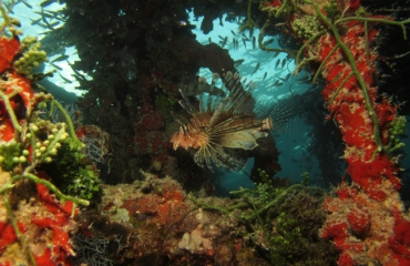 Aike Willemsen - Hurghada (deel 5)