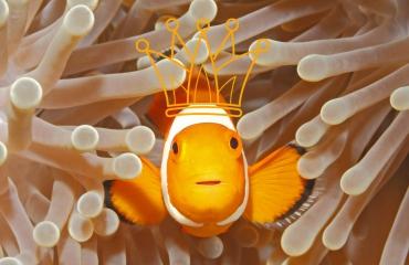 Dresscode voor Koningsdag: oranje!