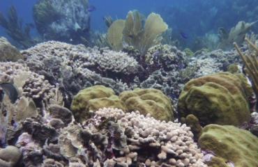 BAM bereid om schade aan Curaçaos koraalrif te vergoeden