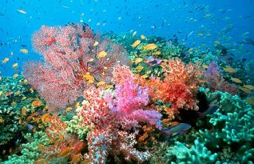 Is de Reefolution nabij?