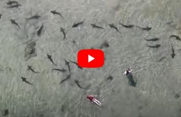 Snorkelen met luipaardhaaien