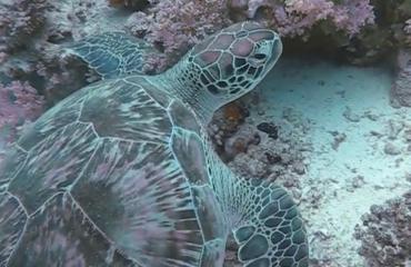 Malini Witlox - De schildpadden van de Rode Zee