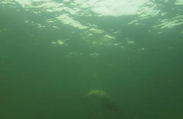 Marloes Otten - Zeehond onder water