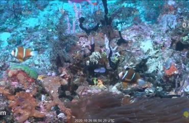 Nieuw vrijstaand rif ontdekt bij het Great Barrier Reef
