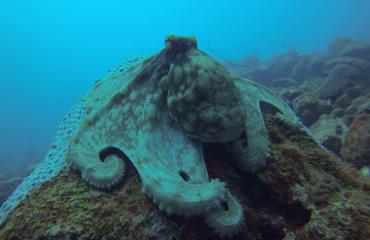 Leendert Oosse - Octopus op Aruba