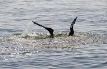 Tweede strafzaak over duikongeval