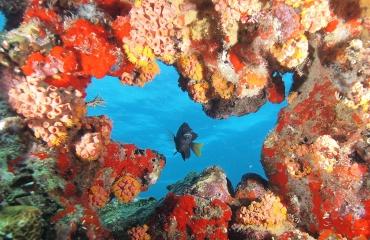 Kijkje onder water met Marloes Otten