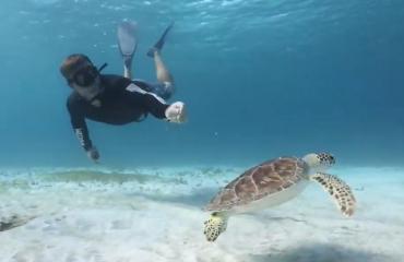 Joost Boerman - Schildpadden in het paradijs