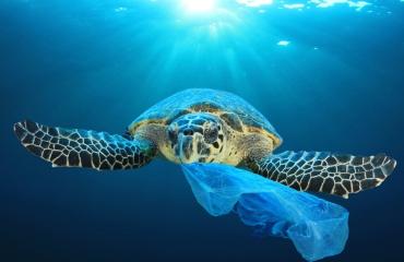 Schildpadden zien plastic aan voor voedsel