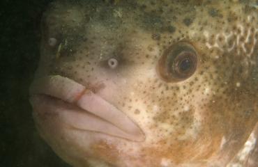 Hoe heet die vis ook alweer?