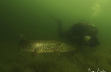 Mieke Noordanus - Na duiken in zout water moet je spoelen