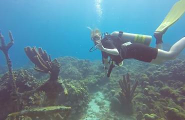 Steven Stegeman - Curaçao 4: eindelijk frogfish!