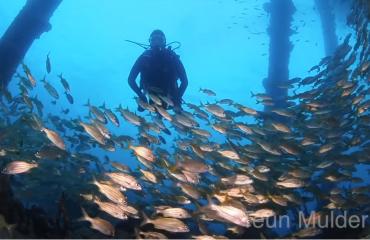 Teun Mulder- Nachtduiken op Cocos Island