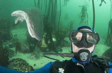 Uniek haaiengedrag in beeld