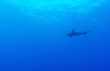 Vidar Kraaijevanger - The usual suspects… en haaien, heel veel haaien
