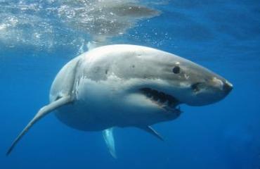 Duik in het onderwaterleven met deze gratis online cursussen