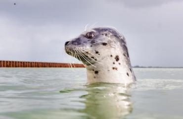 Snorkelen met zeehonden - waar kan het?