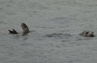 Duikers ontmoeten zeehonden
