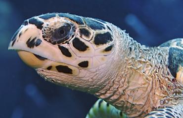 Film: Schildpad met verstopte neus