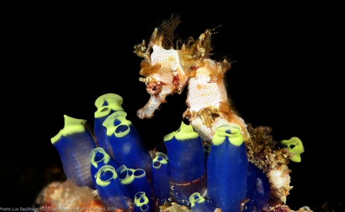 Foto- en videowedstrijd: Guylian Seahorses of the World 2018