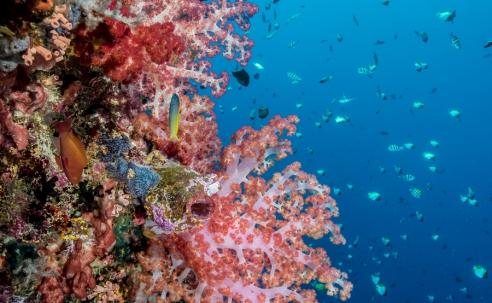 Alles over koralen