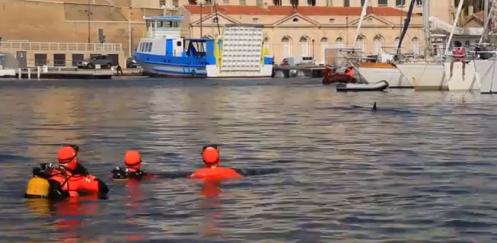 In beeld: Brandweerduikers wijzen walvis de weg