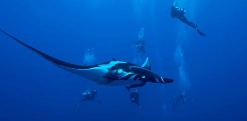 Diving World nodigt je uit!