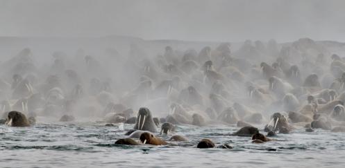 Vakantietip: BBC's Oceans in het Omniversum
