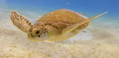 Michael Heus - Schildpad wordt buddy met duiker