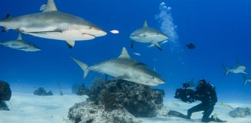 Wildlife Film Festival Rotterdam met veel onderwaterfilms - win nu kaarten!