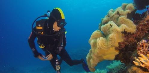 Sverrin Schoonderwoerd - Onvergetelijke duiksafari oostkust Australië