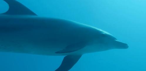 Carl Churchgarden - Close encounter met dolfijn in Hurghada