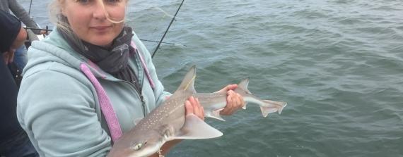 Shark attack?!