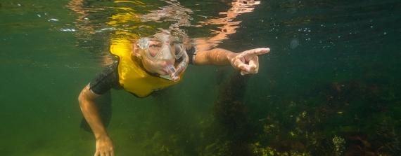 Op snorkelsafari in het Grevelingenmeer