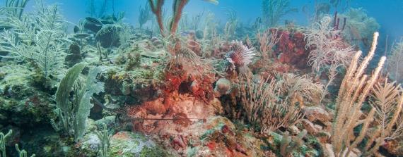 Expeditie Saba Bank 2018 - Statia: de gouden rots
