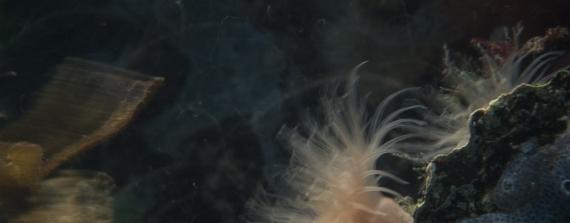 Ad Aleman - Bewegende anemonen