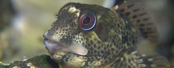 Jeroen Thoolen - Vriendelijke vrolijke visjes