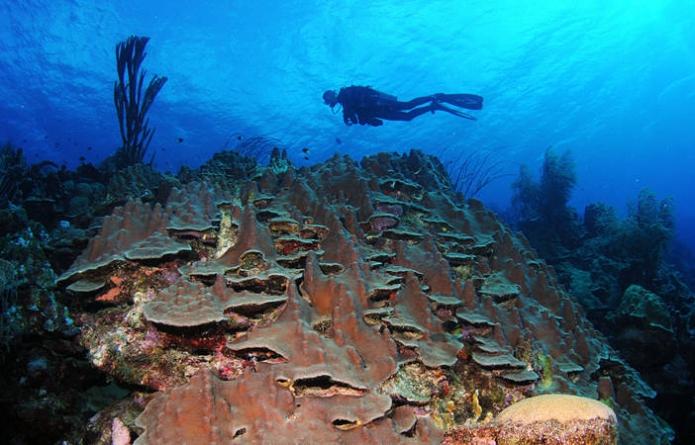 Ontdekkingen bij Saba: nieuw koraalrif en enorme gaten