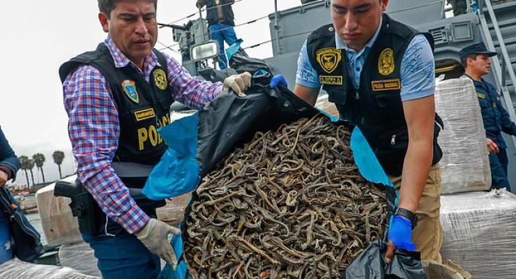 Meer dan 12 miljoen zeepaardjes onderschept